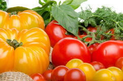 Composition of different varieties of tomatoes and herbs on a bu Royalty Free Stock Photography