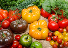 Composition of different varieties of tomatoes and herbs Royalty Free Stock Image
