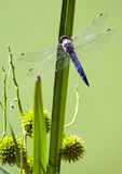 Composition with dragonfly Royalty Free Stock Images
