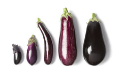 Composition of eggplants. On white background Royalty Free Stock Images