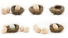 Composition with empty nest and big eggs inside the small nests. stock photography