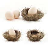 Composition with empty nest and big eggs inside the small nests. stock photo