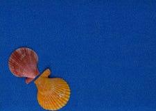 Composition en été avec des coquilles sur le fond bleu de scintillement image libre de droits