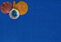 Composition en été avec des coquilles sur le fond bleu de scintillement photographie stock libre de droits