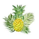 Composition en été avec les plantes tropicales exotiques et l'ananas frais, d'isolement sur le fond blanc Illustration pour aquar illustration de vecteur