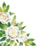 Composition en aquarelle avec les pivoines blanches et de loup illustration stock