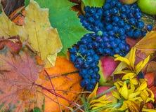Composition en automne avec des fruits et légumes Photos libres de droits