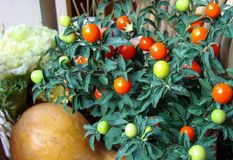 Composition en automne avec des potirons et des tomates photos stock