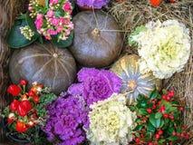 Composition en automne avec des potirons, des poivrons rouges et des fleurs images stock