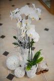 Composition en décor d'hiver avec l'orchidée Images libres de droits