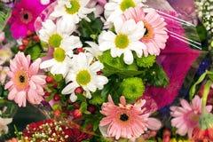 Composition en fleur de différents types de fleurs image stock