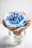 Composition en fleur de Muscari dans des vases en verre Photographie stock libre de droits