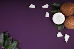 Composition en noix de coco sur un fond violet Noix de coco fraîches, organiques, exotiques et tropicales avec les feuilles verte images libres de droits