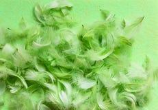 Composition en Pâques avec le décor traditionnel des plumes vertes photos stock