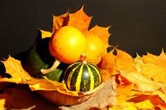 Composition en potiron de décoration de thanksgiving sur le fond foncé Image libre de droits