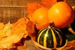Composition en potirons de thanksgiving sur le conseil en bois Image libre de droits