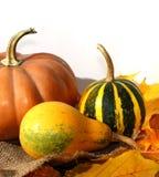 Composition en potirons de thanksgiving sur le conseil en bois Photo libre de droits