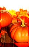 Composition en potirons de thanksgiving sur le conseil en bois avec le cadre Photographie stock libre de droits