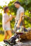 Composition en raisin et en vin dans le vignoble Images stock