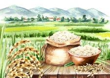 Composition en riz dans le paysage avec le champ Aquarelle tirée par la main illustration libre de droits