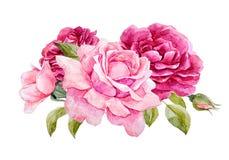 Composition en roses d'aquarelle illustration libre de droits