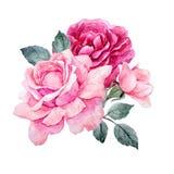 Composition en roses d'aquarelle illustration stock