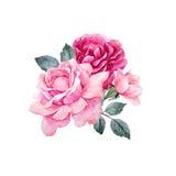 Composition en roses de vecteur d'aquarelle illustration stock