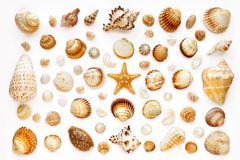 Composition of exotic sea shells and starfish. Pattern of exotic sea shells and starfish on a white background. top view. isolated on white Stock Images