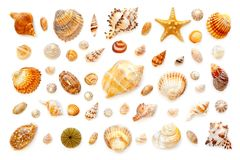Composition of exotic sea shells and starfish on a white backgro. Pattern of exotic sea shells and starfish on a white background. top view. isolated on white Royalty Free Stock Photo