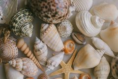 Composition of exotic sea shells on white background. Close up view of different seashells piled together as texture and backgroun. D for design royalty free stock photos