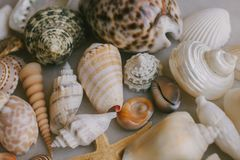 Composition of exotic sea shells on white background. Close up view of different seashells piled together as texture and backgroun royalty free stock photography