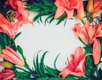Composition exotique de fleurs Tressez le cadre fait de fleurs roses de lis sur le fond blanc Art, exotique, concept d'été Vintag Image stock