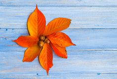 Composition fall leaves flower acorns middle Stock Photography