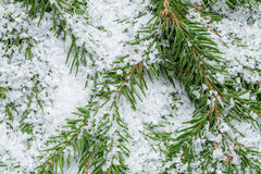 Composition from fir twigs with snowflakes Royalty Free Stock Photo