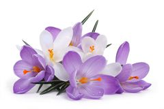 The composition of the first spring flowers. Stock Photography