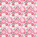 Composition florale de fines herbes tendre mignonne merveilleuse de pivoines roses avec les feuilles de vert et le modèle rouge d Photo stock