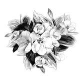 Composition florale des branches et des fleurs d'Apple Illustration Libre de Droits