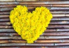 Composition florale des pissenlits Photo stock
