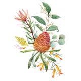 Composition florale en banksia australien d'aquarelle illustration libre de droits