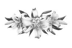 Composition florale en beau lis noir et blanc Bouquet des fleurs Impression florale Dessin de marqueur illustration stock