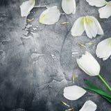 Composition florale faite de tulipes et pétales blancs sur le fond foncé Configuration plate, vue supérieure Fond floral de trame Image stock