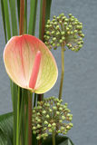 Composition flower, Anthurium Anthurium Schott and Garlic Allium Stock Photos