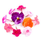 Composition of flowers Stock Photo