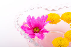 Composition with flowers. Shoot of nice abstract composition with flowers Stock Photos