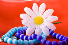 Composition with flowers. Shoot of nice abstract composition with flowers Stock Photography