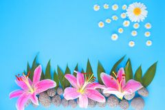 A composition of flowers, leaves and stones. Representing a landscape on a blue background under the sun from a chamomile Royalty Free Stock Photos