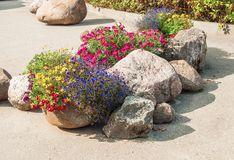Composition of flowers and stones. Beautifu composition of flowers and stones in garden Stock Photos