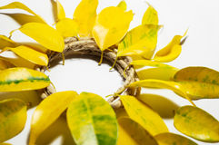 Composition in the form of the sun, circle, flower of yellow aut Stock Images