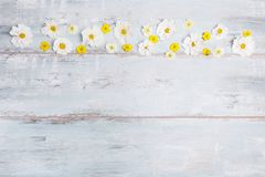 A bouquet of white flowers cosmea or cosmos with ribbon on white boards. Garden yellow flowers over handmade wooden table backgrou. Composition, frame cosmea Royalty Free Stock Image