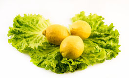 Composition of fresh and cut lemons on salad on white background Stock Photos